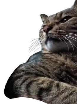 老猫01_ポーズ.jpg